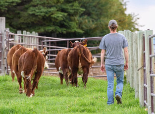 2020 FEMALE SALE PICTURES NOW COMPLETE