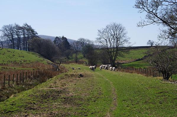 NCR68 between Slaggyford and Lambley in South Tynedale