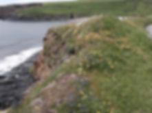Cliff-top wild flowers