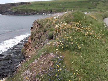 Cliff-top wild flowers