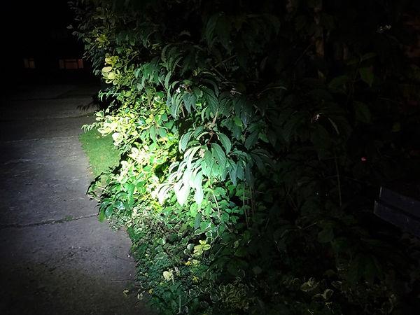light beam shrub night bicycle