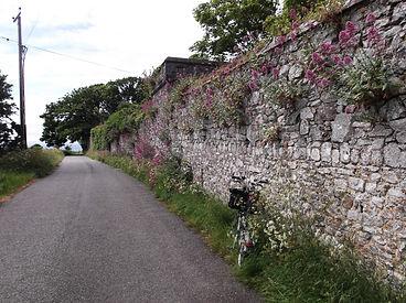 Wall, Bromton, Valerian