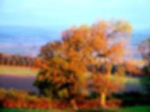 Autumn view, near Rothbury, Northumberland