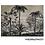 Thumbnail: Set de table 33cm x 45cm - Palmier noir & blanc