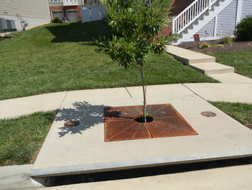 After-Bioretention-Filterra Tree Boxes.p
