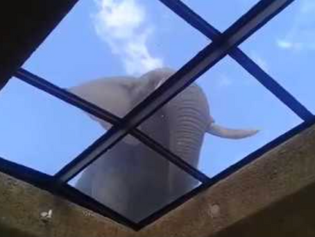 The elephant in the roof