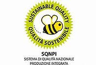 SQNPI OIP.jpg