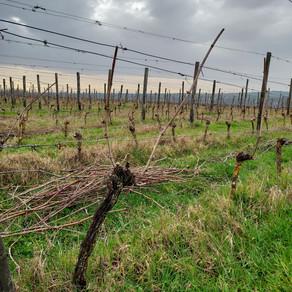 À la découverte du vignoble Isérois