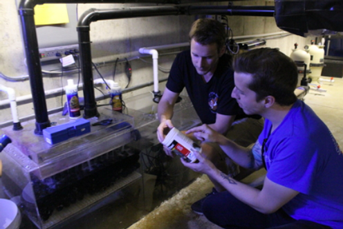 Guys reading instructions for reef tank nutrients