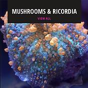 mushroom coral for sale