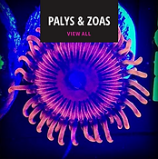 palys and mushrooms for sale