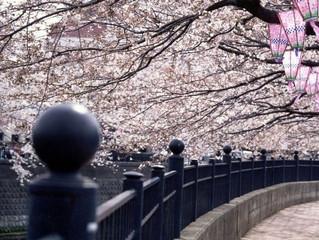 茅ヶ崎元町整体院 春といえば