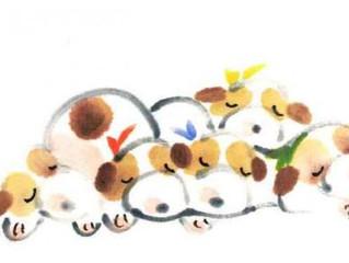 茅ヶ崎元町整体院 2月12日【月】祝日は営業致します。