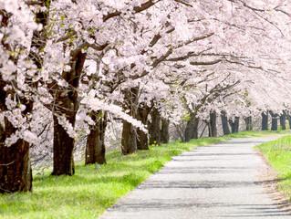 茅ヶ崎元町整体院 4月の定休日お知らせ