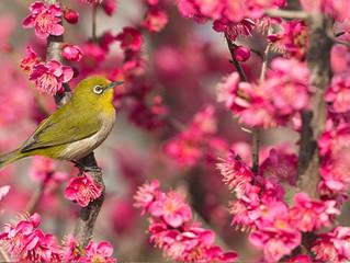 茅ヶ崎元町整体院 3月の定休日のお知らせ