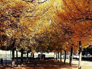 News septembre  //                          L'automne est arrivé.