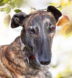 Zero greyhound 5