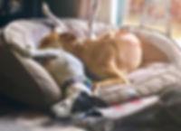 Greyhound couch potato | R2R
