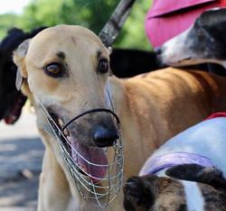 Brock Greyhound 32
