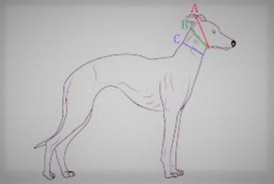 Measure collar (2).jpg