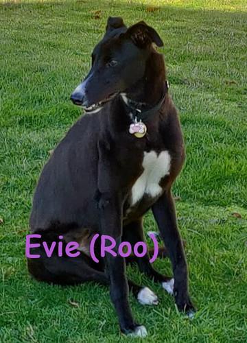 Evie (now Roo)