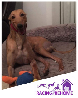 Tess greyhound 6