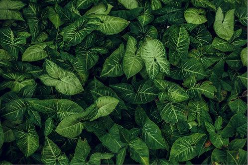 Fundo Fotográfico em Tecido Helanca Light - Folhas / Plantas