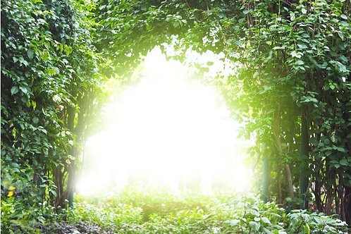 Fundo Fotográfico em Tecido Helanca Light - Jardim