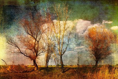 Fundo Fotografico Tecido Helanca Light - Floresta Outono