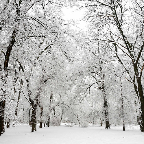 Fundo Fotográfico em Tecido Helanca Light - Arvore Natal
