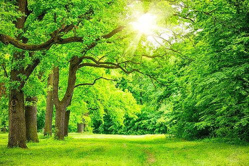 Fundo Fotografico Tecido Helanca Light - Floresta
