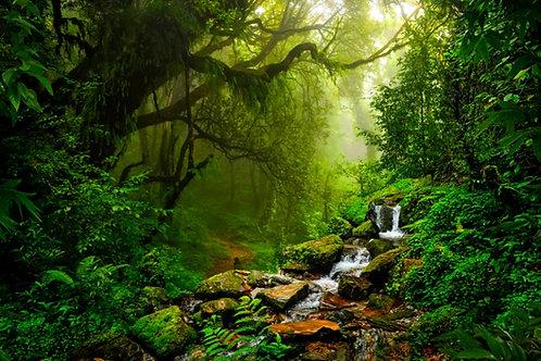 Fundo Fotográfico em Tecido Helanca Light - Floresta