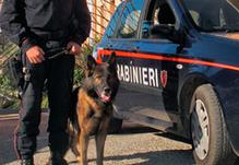 Turi (BA) e Putignano (BA). Arrestato un pusher con 12 dosi di cocaina ed eseguito un ordine di esec