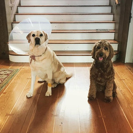 Griffin and Murphey