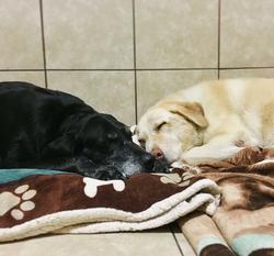 multiple dog baording