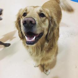 doggie boarding