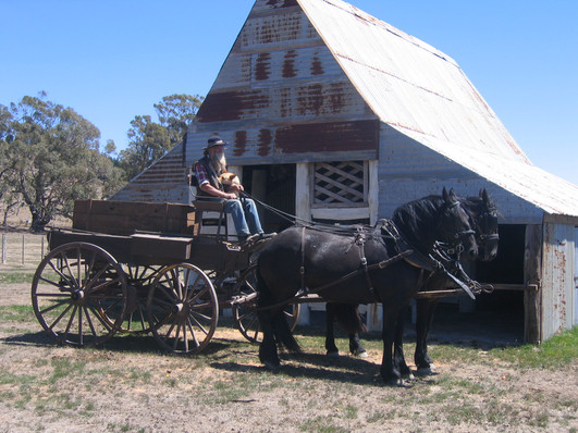 drovers wagon 005.jpg