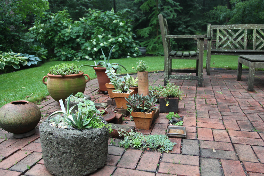 Patio Garden in Rain