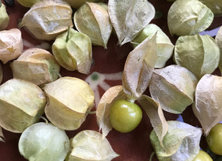 Ground Cherry Preserves for Ma Ingalls