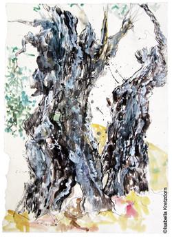el olivar I