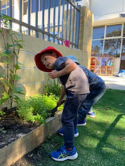 about us gardening