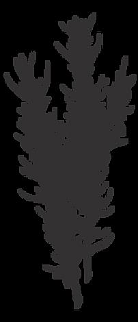 Illustrated Rosemary