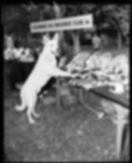 1954 Dog trials.jpeg