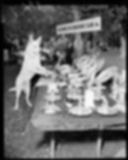 1954 dog trials 2.jpeg