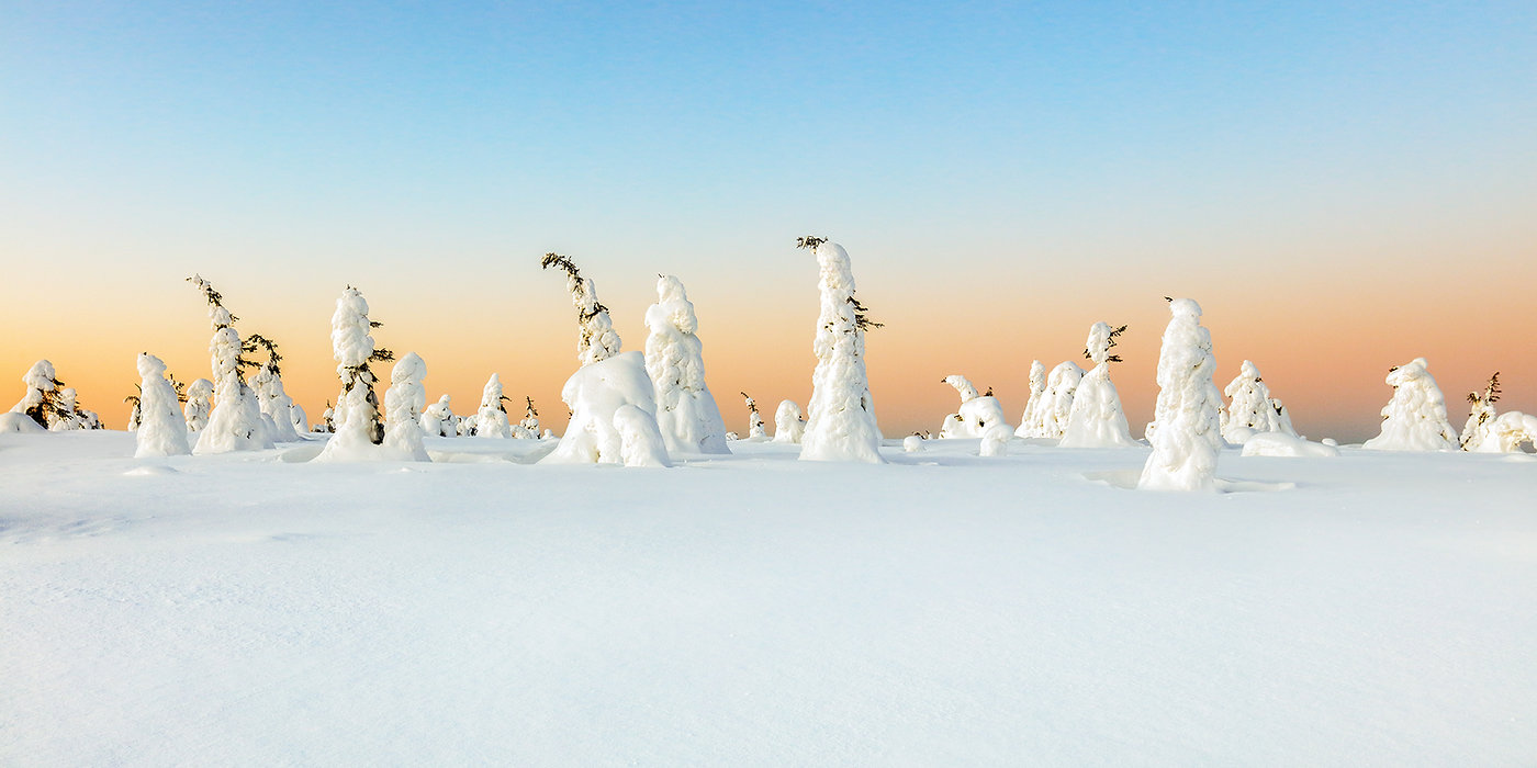 Winter Wonderland_2048_2x1.jpg