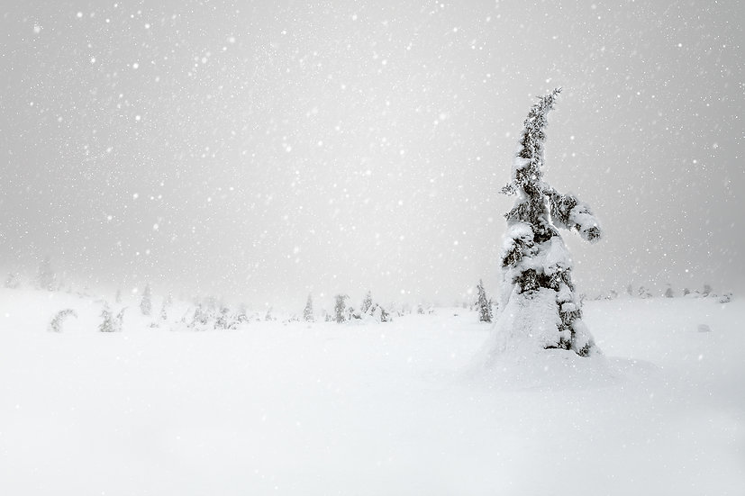 Winter Dreams