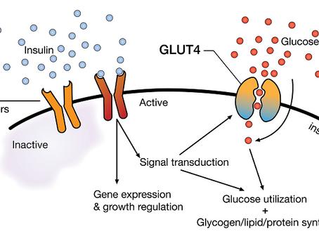 Insulino resistenza, quando le cellule non assorbono il glucosio