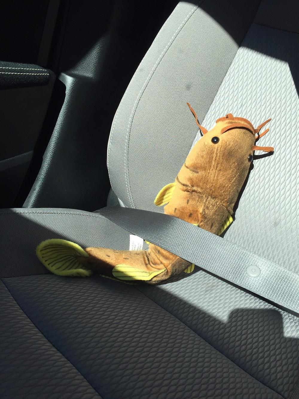 #MuddyJr buckled into car.