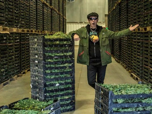 Mike Dirnt of Green Day starts new venture in cannabis