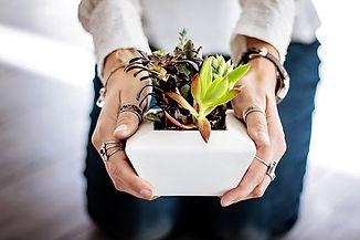 succulents-2347550__340.jpg